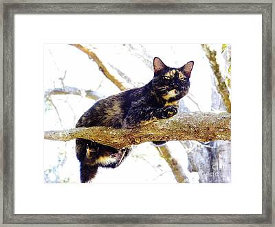 Cat - Out - On - A - Limb Framed Print by D Hackett