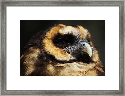 Owl Framed Print by Paulette Thomas