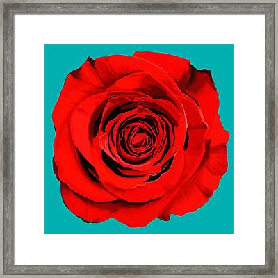 Painting Of Single Rose Framed Print