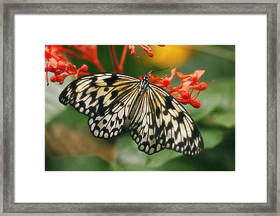 Paper Kite Butterfly Framed Print