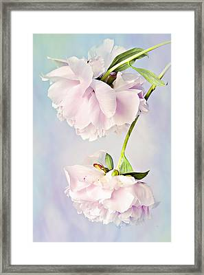 Pastel Peonies Framed Print by Theresa Tahara
