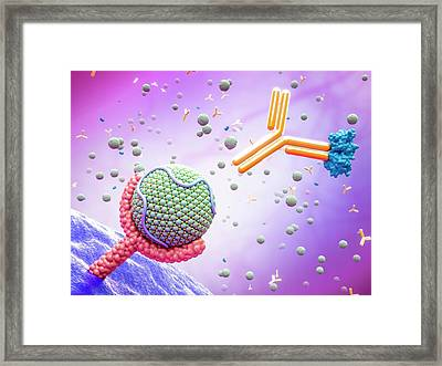 Pcsk9 Inhibitor And High Cholesterol Framed Print by Maurizio De Angelis