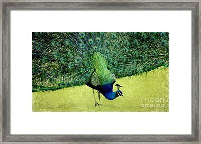 Peacock Plume Framed Print by Linde Townsend