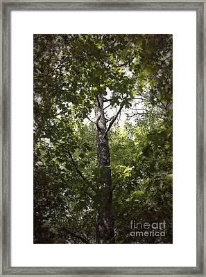 Peeking Through Framed Print