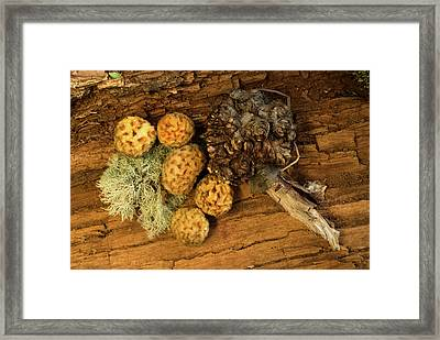 Perito Moreno National Park Framed Print