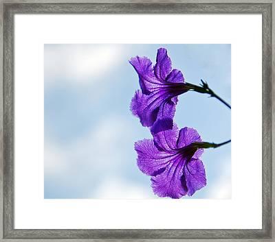 2 Petunias  Framed Print by John Harding