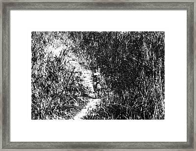 2 Photographers Walking Through Tall Grass In The Okhla Bird Sanctuary Framed Print by Ashish Agarwal