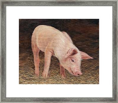 Pig Framed Print by David Stribbling