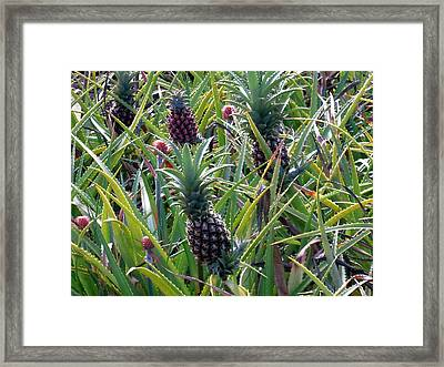 Pineapple Dance Framed Print