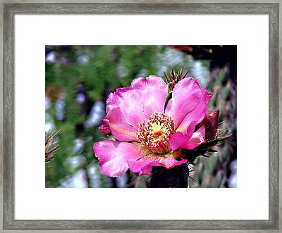 Pink Cactus Flower Framed Print by Linda Cox