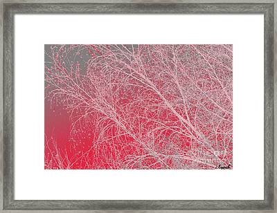 Pink  Framed Print by Carol Lynch