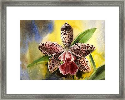 Pink Cattleya Orchid Framed Print by Alfred Ng