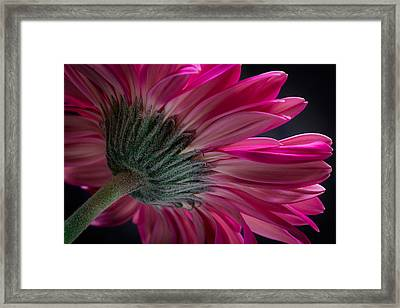 Framed Print featuring the photograph Pink Flower by Edgar Laureano