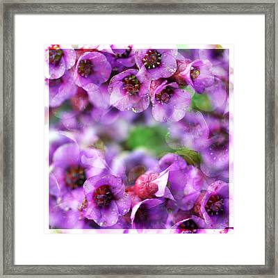 Pink Flowers Framed Print by Tommytechno Sweden