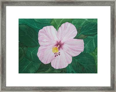 Pink Hibiscus Framed Print by Patty Dopkin