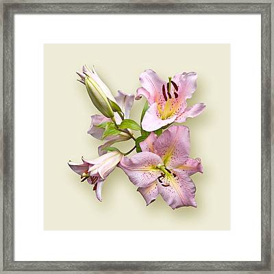Pink Lilies On Cream Framed Print by Jane McIlroy