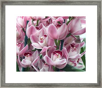 Framed Print featuring the photograph Pink Orchids by Debbie Hart