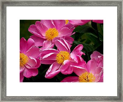 Pink Petals Framed Print by Eunice Miller