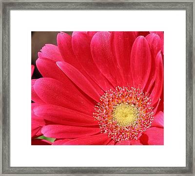 Pink Sensation Framed Print by Bruce Bley
