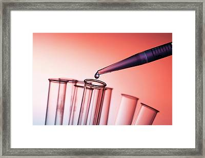 Pipette And Test Tubes Framed Print