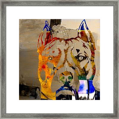 Pitbull Framed Print by Marvin Blaine