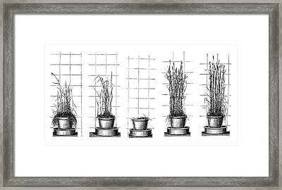 Plant Growth Experiments Framed Print