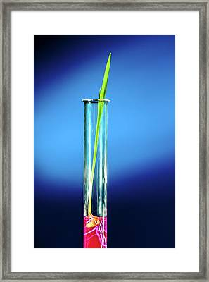 Plant In Test Tube Framed Print