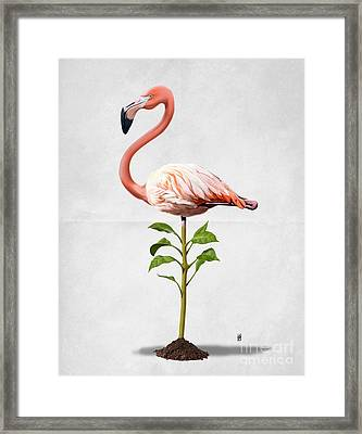 Planted Wordless Framed Print by Rob Snow