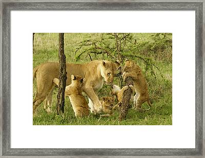 Playing With Mom Framed Print