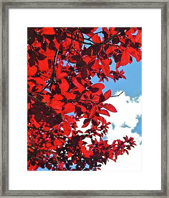 Plum Tree Cloudy Blue Sky 3 Framed Print by CML Brown