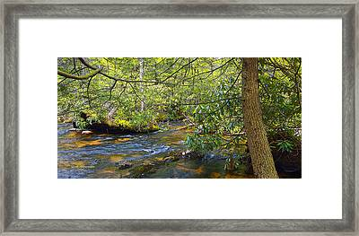 Pocono Mountain Stream In Summer Pennsylvania Framed Print by A Gurmankin