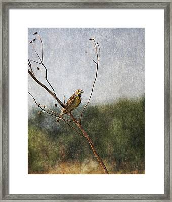 Poised Framed Print by Dale Kincaid
