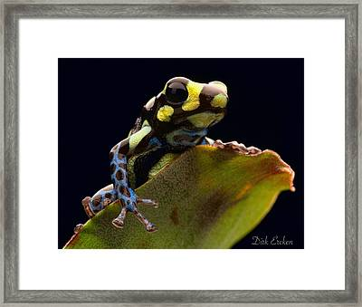 Poison Arrow Frog Framed Print by Dirk Ercken