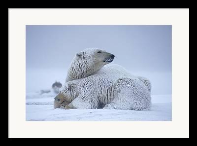 Winter Sleep Framed Prints