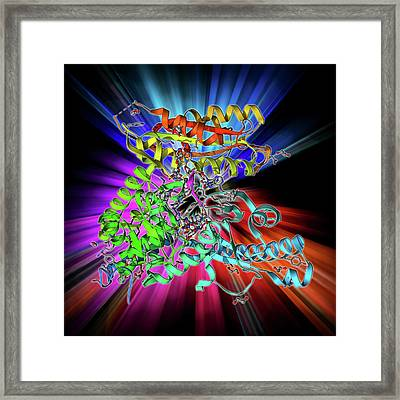 Polya Polymerase And Rna Framed Print by Laguna Design
