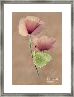 Poppies Framed Print by Jaroslaw Blaminsky