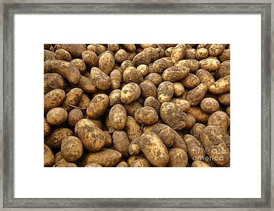 Potatoes Framed Print by Olivier Le Queinec