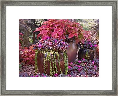 Pots Of Flowers Framed Print