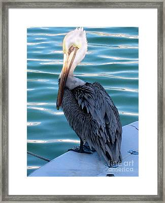 Precious Pelican Framed Print by Claudette Bujold-Poirier