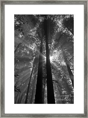 Presence Framed Print