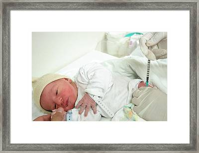 Preterm Birth Baby Framed Print by Photostock-israel