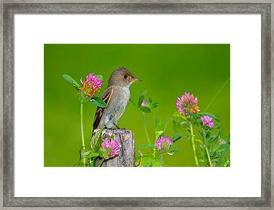 Pretty In Pink 1 Framed Print by John Absher