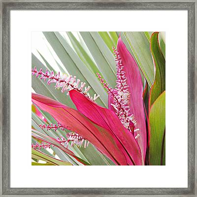 Pretty Pink In Key West Framed Print