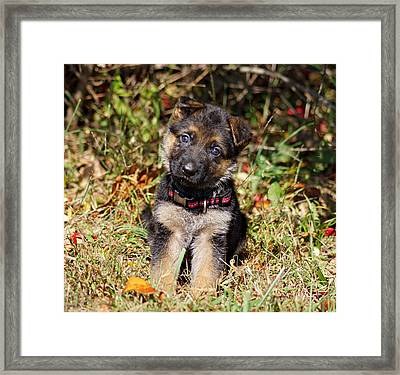Pretty Puppy Framed Print by Sandy Keeton