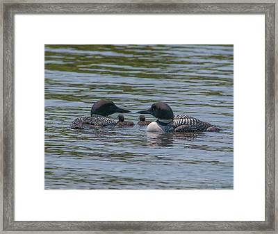 Proud Parents Framed Print by Brenda Jacobs