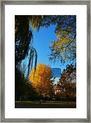 Public Garden Fall Tree Framed Print by Toby McGuire
