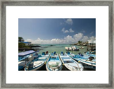 Puerto Ayora Framed Print by William H. Mullins