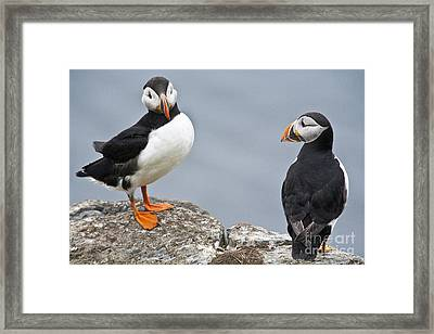 Puffins Framed Print by Heiko Koehrer-Wagner