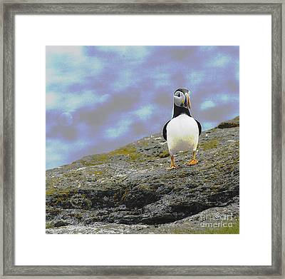 Puffins Post Framed Print by Jim  Hatch