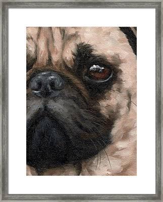 Pug Portrait Painting Framed Print